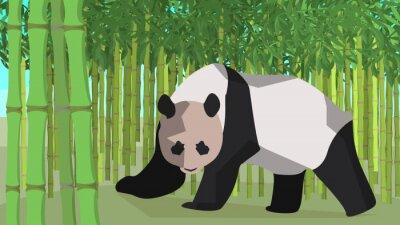 Naklejka Panda in a bamboo grove, animal, nature