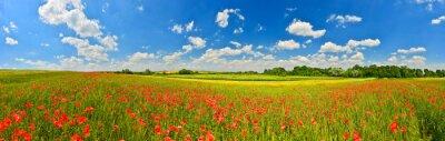 Panorama pola maku w lecie wsi