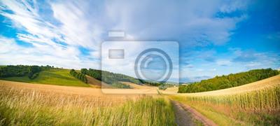 Naklejka Panorama pola pszenicy rano w Kansas