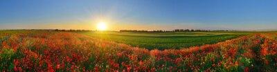 Panorama polu maku w świcie wsi