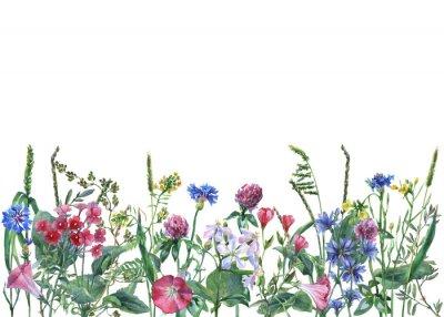 Naklejka Panoramiczny widok dzikich kwiatów polnych i trawy na białym tle. Pozioma granicy z kwiatów i ziół. Akwarela ręcznie malowana ilustracja.