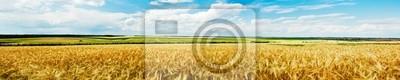 Naklejka Panoramiczny widok na pole pszenicy