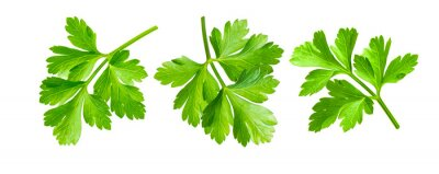 Naklejka Parsley herb isolated on white background