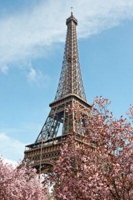 Naklejka Paryż wiosną. Kwitnących drzew wiśni i Wieża Eiffla.