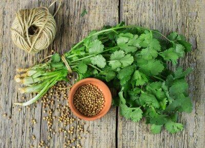 Naklejka Pęczek świeżej kolendry i nasion kolendry