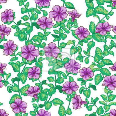 Petunia kwiaty wzór
