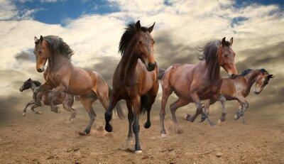 Naklejka pięć nieposkromiony galopujący koń