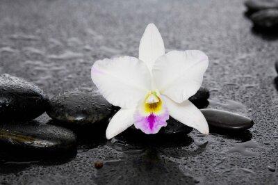 Naklejka Piękna biała orchidea z kamieni terapii