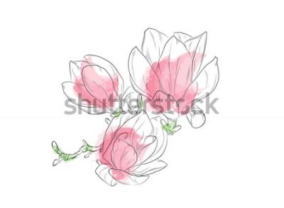 Naklejka Piękna i delikatna akwarela magnolia na białe i jasne tło