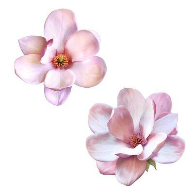 Naklejka Piękna magnolia, wiosna kwiat samodzielnie