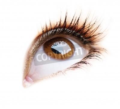 Naklejka Piękna Oko Kobieta na białym tle