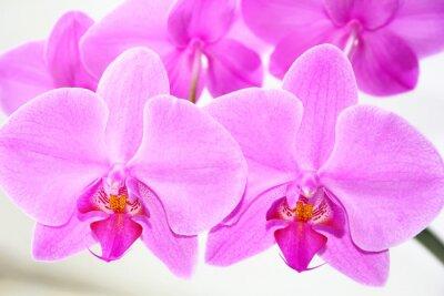 Naklejka Piękna orchidea