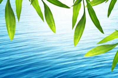 Naklejka Piękne bambusa z niebieskim tle wody