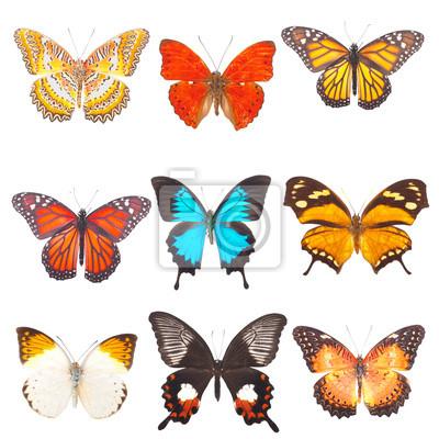 Piękne barwny motyle są izolowane
