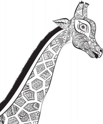 Naklejka Piękne dorosłych Żyrafa. Ręcznie rysowane ilustracji ozdobnych żyrafy. żyrafa na białym tle. Szef ozdobna żyrafa