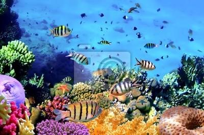 Naklejka Piękne korali i ryb