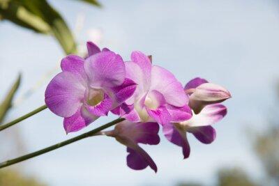 Naklejka Piękne kwiaty orchidei w ogrodzie