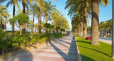 Naklejka Piękne palmy aleja, Salou, Hiszpania, Europa