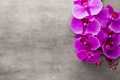 Naklejka Piękne różowa orchidea na szarym tle.