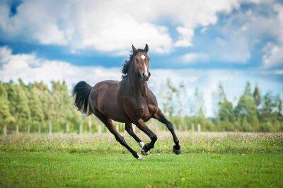 Naklejka Piękne warmblood koń działa na polu w lecie