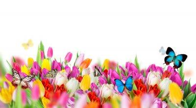 Naklejka Piękny bukiet tulipanów.