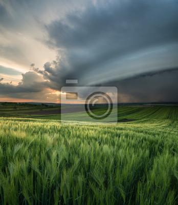 Naklejka Piękny krajobraz naturalny w okresie letnim