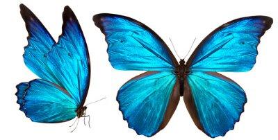 Naklejka piękny motyl na białym