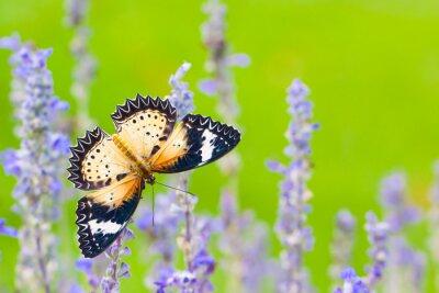 Naklejka Piękny motyl na kwiat w ogrodzie kwiatowym.