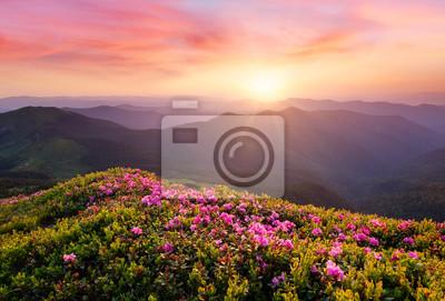 Naklejka Piękny naturalny krajobraz w okresie letnim