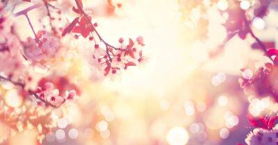 Naklejka Piękny wiosenny charakter sceny z różowym drzewa kwitnące