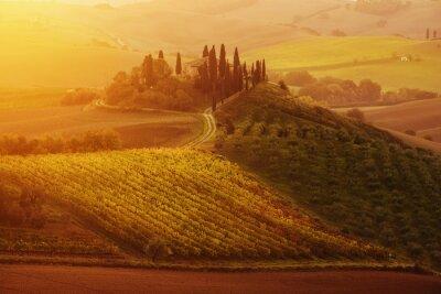 Naklejka Piękny złoty wschód słońca w Toskanii we Włoszech z winnicy. Naturalne Idillyc sezonie jesień tło