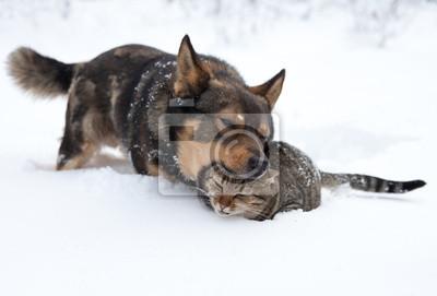 Pies i kot gry w śniegu