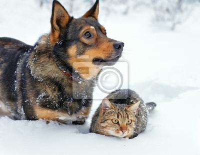 Pies i kot siedzi na śniegu