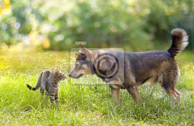 Pies i kot wąchania siebie