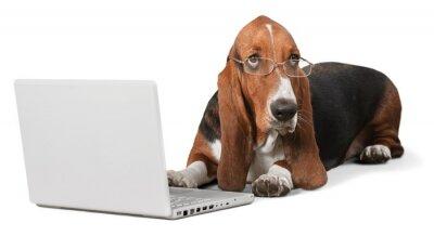 Naklejka Pies, Komputery, Zwierzęta.