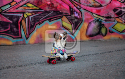 Naklejka pies na deskorolce