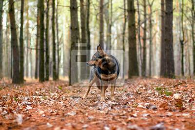 Pies spaceru w lesie jesienią
