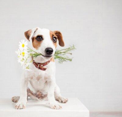 Naklejka Pies z bukietem kwiatów w zęby