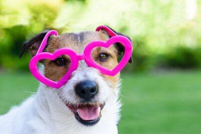 Naklejka Pies z walentynki wygląd