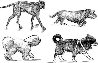 Naklejka pieszo psy