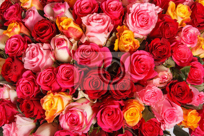 Naklejka Pink and red rose flowers bouquet. Colorful romantic decoration of assorted roses. Nature floral background