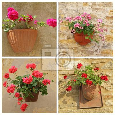 Plakat Z Kwiatami Geranium W Rustykalnym Doniczki Wiszące Na Naklejki Redro
