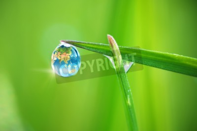 Naklejka Planeta Ziemia w rosie, makro na liściu. Projekt koncepcyjny. Elementy tego zdjęcia dostarczone przez NASA.