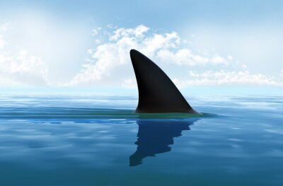 Naklejka Płetwy rekina nad wodą