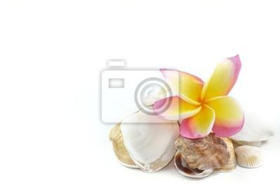 Plumeria kwiaty i muszle morskie .. na białym tle