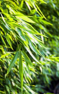 Naklejka Płyta świeży zielony bambus