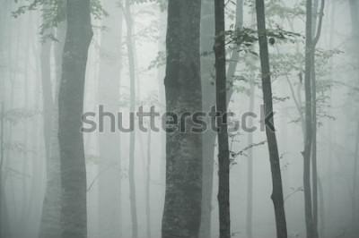 Naklejka pnie buków w gęstej mgle