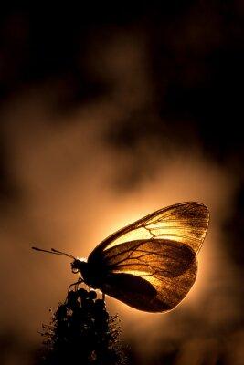 Naklejka podświetlany Butterfly