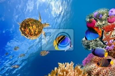 Naklejka Podwodne krajobraz z para Butterflyfishes i żółw