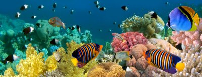 Naklejka Podwodne panoramy z ryb Anioł, rafa koralowa i ryby . czerwony